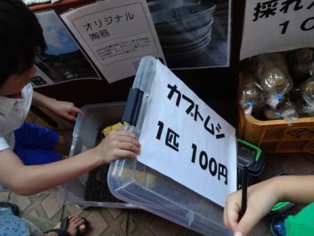 カブト虫一匹100円!!(若駒の里「なつまつり」)