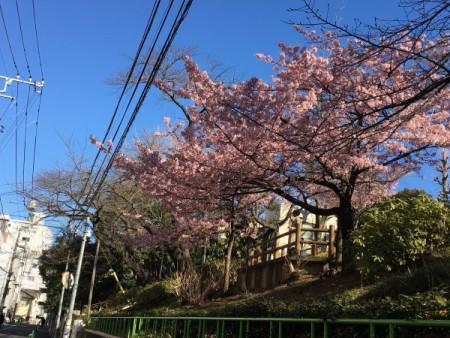 春の気配!!(清和公園にて・・・)